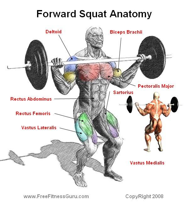 Freefitnessguru Forward Squat Anatomy