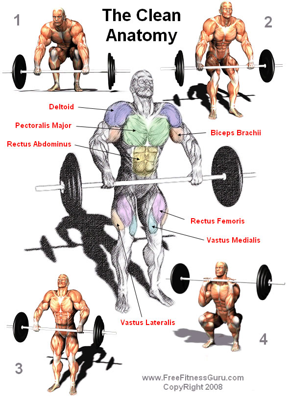 barbell clean anatomy