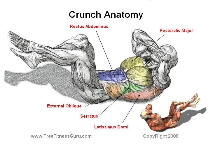 abdominal crunch anatomy
