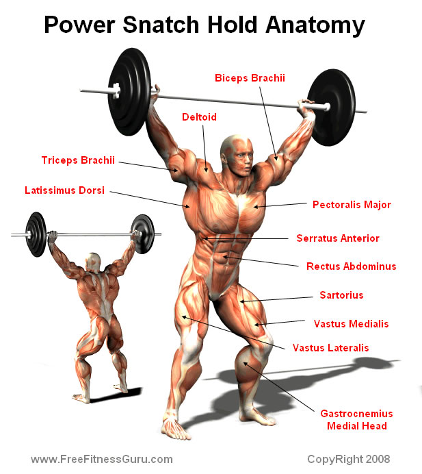 power snatch anatomy