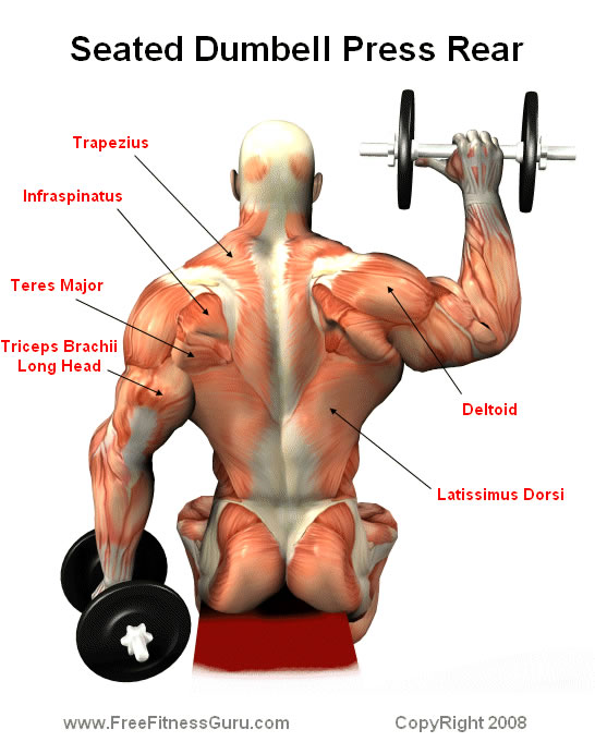seated dumbell press rear