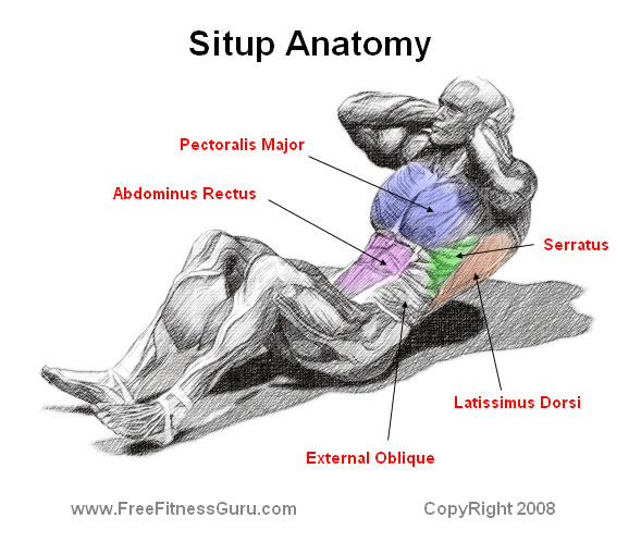 situp anatomy