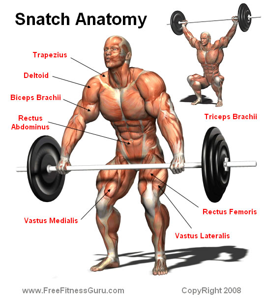snatch anatomy